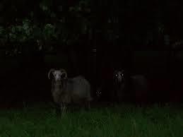 animalsindark