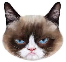 Cat consciousness